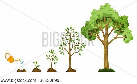 Stages Growth Of Tree From Seed. Watering The Plants. Collection Of Trees From Small To Large. Green