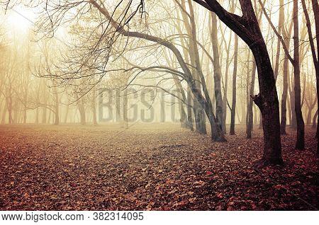 Fall November landscape. Foggy fall park with falling dry autumn leaves. The fall season. Colorful fall landscape, foggy fall nature. Fall November foggy scene, fall background