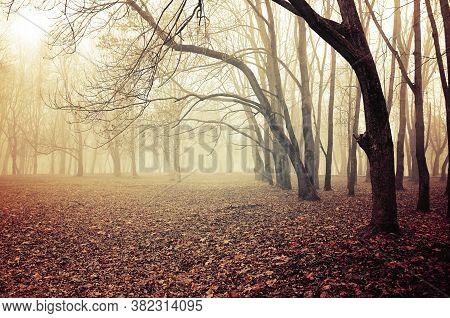 Fall November landscape. Foggy fall park with falling dry autumn leaves. The fall season. Colorful fall landscape, foggy fall nature. Fall November foggy scene, fall background