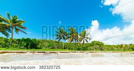 Le Saline Beach In Guadeloupe Under A Blue Sky, French West Indies. Lesser Antilles, Caribbean Sea