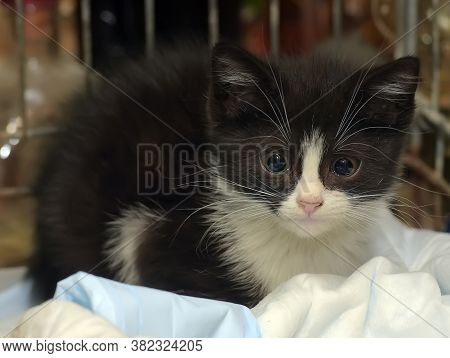 Black And White Kitten Kitten In A Cage In A Shelter