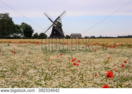 Windmill And Poppy Field On A Sunny Day