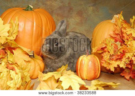 Bunny In The Pumpkins