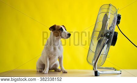 A Small Cute Dog Sits On A Table In Front Of A Large Electric Fan On A Yellow Background. Jack Russe