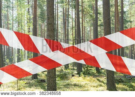Closed Green Wild Forest. Save The Forest From Fire. Beautiful Green Rain Forest Closed. No Entry Pi