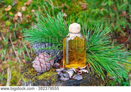 Pine Nut Oil In A Glass Bottle. Nearby Are Cedar Branches And Cedar Cones. On A Stump Overgrown With