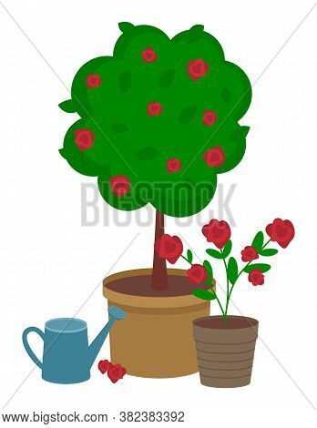 Red Rose Round Bush With Large Pot And Bouquet Of Red Roses In A Small Pot. Watering Can For Flowers