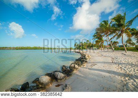 White Sand And Palm Trees In Marathon Key. Florida, Usa