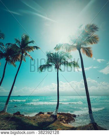 Palm Trees And Turquoise Sea Under A Shining Sun In Bas Du Fort Beach In Guadeloupe, French West Ind