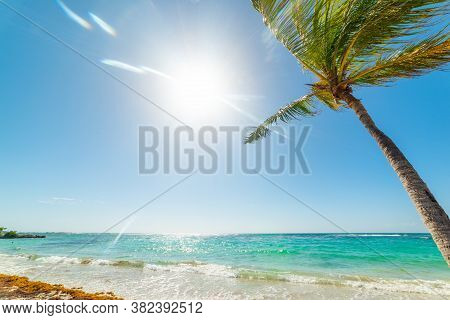 Palm Tree And Turquoise Water In Raisins Clairs Beach In Guadeloupe, French West Indies. Lesser Anti