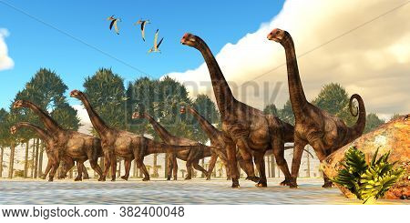 Brontomerus Herd 3d Illustration - A Flock Of Pteranodon Reptiles Fly Over A Herd Of Brontomerus Din