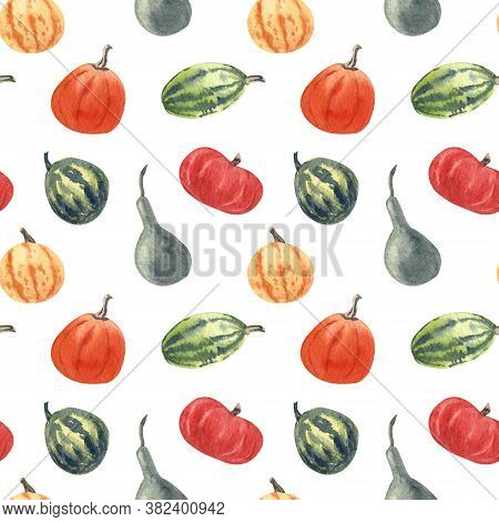 Watercolor Seamless Pattern With Colorful Squashes And Gourds On White Background. Great For Fabrics
