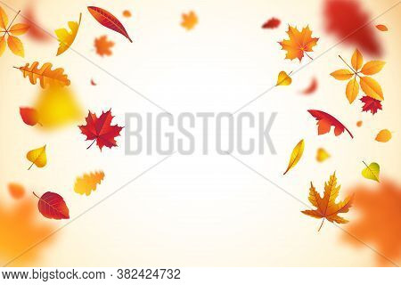 Falling Colorful Autumn Leaves With Defocused Blur Effect. Autumn Background With Leaf Fall For Your