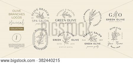 Set Of Olive Branch With Leaves Logo Design Template In Simple Minimal Linear Style. Abstract Femini