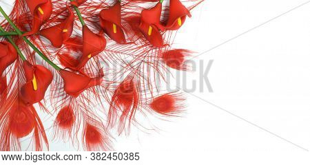 Red calla lilies on a white background. St. Valentine's Day. Beautiful red flowers. Red feather