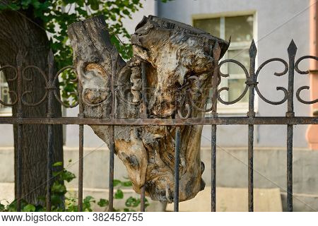 A Piece Of Tree Trunk Stuck On A Metal Fence After Being Cut Down