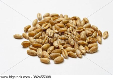 Wheat Grains On A White Background. Heap Of Cereal Grains Isolated Close Up. Seeds Of Barley, Wheat,