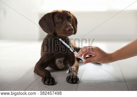 Woman With Syringe Near Dog Indoors, Closeup. Pet Vaccination