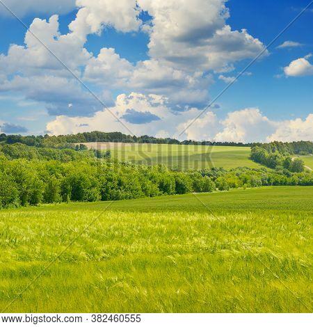 Wheat field and beautiful blue sky