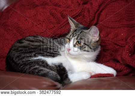 Gray Cat With Stripes And A White Breast And Paws And Yellow Eyes