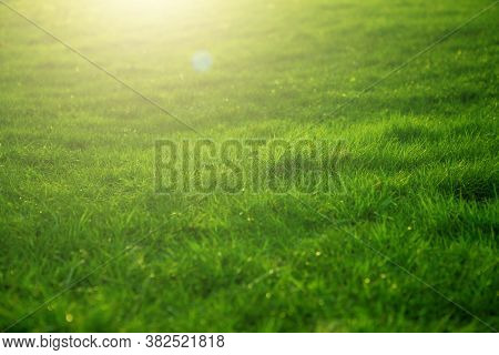 Spring Fresh Bright Green Grass At Sunset On A Warm Sunny Day. Green Grass Background Texture.