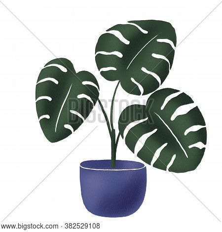 Monstera Deliciosa In The Pot. Hand Drawn Potted House Plant Isolated On White Background. Big Beaut