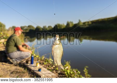 Crucian Fish Caught On Bait By The Lake, Hanging On A Hook On A Fishing Rod, In The Background An An