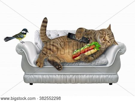 A Cat With A Tv Remote Control And Hot Dogis Lying On A Stylish Gray Leather Divan. A Bird Is Next T