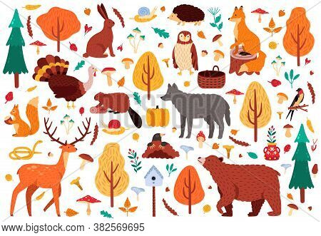 Autumn Cute Animals. Wild Hand Drawn Bear Raccoon Fox And Deer Characters, Woodland Birds And Animal