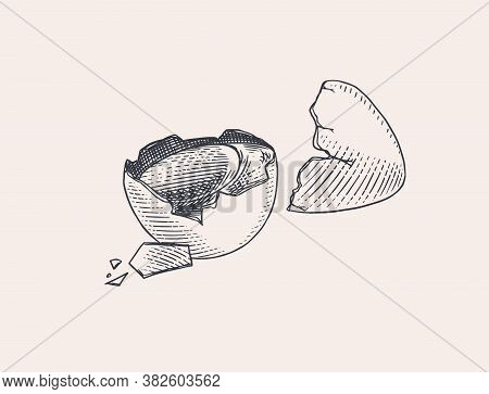 Broken Egg With Yolk And Shell. Farm Product. Engraved Hand Drawn Retro Vintage Sketch. Woodcut Styl