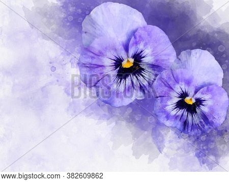 Close-up Of Purple Pansy Flowers In Watercolor. Botanical Illustration For Greeting Card.