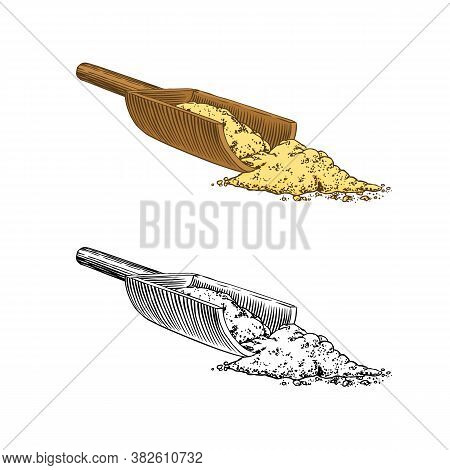 Ginger Root , Chopped Rhizome, Fresh Plant Ingredient. Vector Engraved Hand Drawn Sketch. Pieces Of
