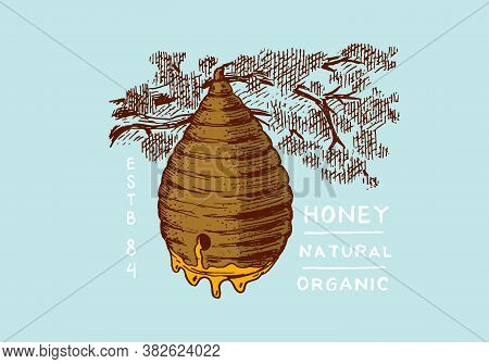 Honey And Bees. Honeycombs And Hive And Apiary. Vintage Logo For Typography, Shop Or Signboards. Bad