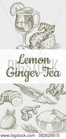Ginger Tea Poster. Chopped Rhizome Or Root, Fresh Plant, Bag And Tea In Glass Cup. Vector Engraved H
