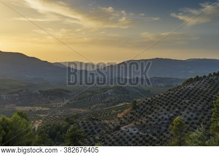 Landscape of olive trees and mountains at sunset near Segura de la Sierra in the province of Jaen -
