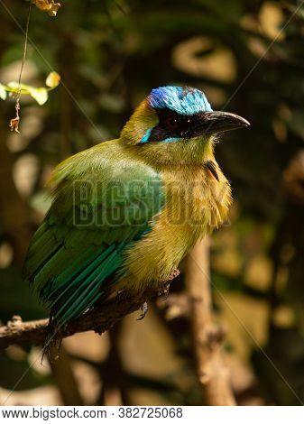 Bee Eater Bird Perched On A Branch, Naturalistic Image Of Tropical Bird