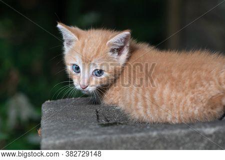 Cute Yellow Tabby Kitten