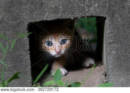 Yellow Tabby Kitten Hiding In A Concrete Block
