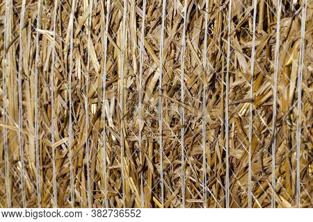 Stubble And Straw Stacks Remaining After Harvest Crops On Agricultural Land, Farming For Profit And