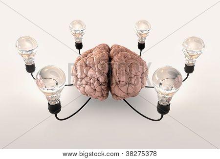 Brain And Lightbulb Imagination