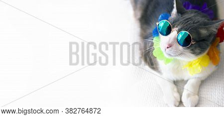 Top View Portrait Of A Fancy Cat Wearing Retro Sunglasses Lying In A White Sofa In Summertime. Cat E