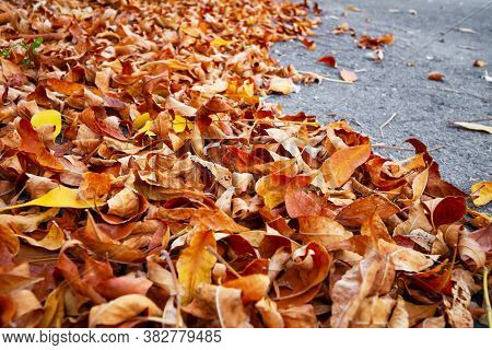 Fallen Leaves On An Asphalt Road In The City. Selective Focus