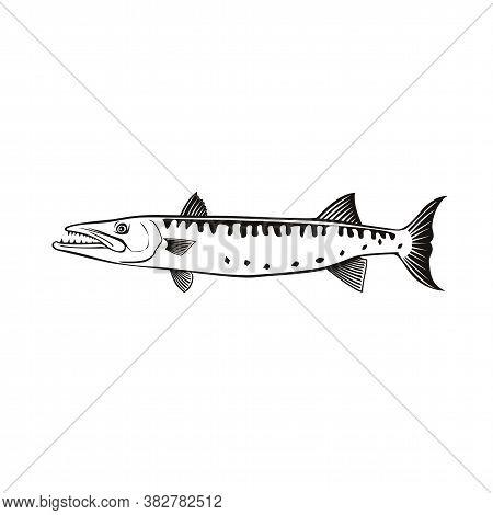 Retro Style Illustration Of A Barracuda Or Sphyraena Barracuda, A Large Predatory Saltwater Ray-finn