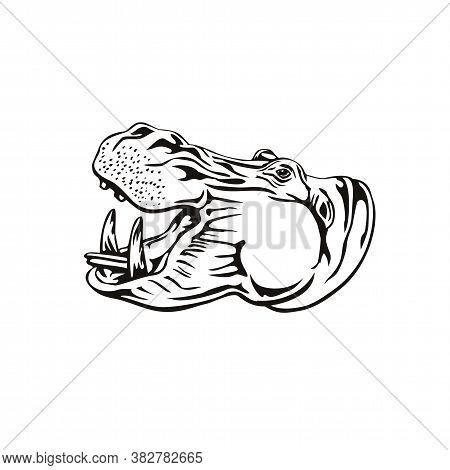 Retro Woodcut Style Illustration Of Head Of A Hippopotamus, Hippo, Common Hippopotamus Or River Hipp