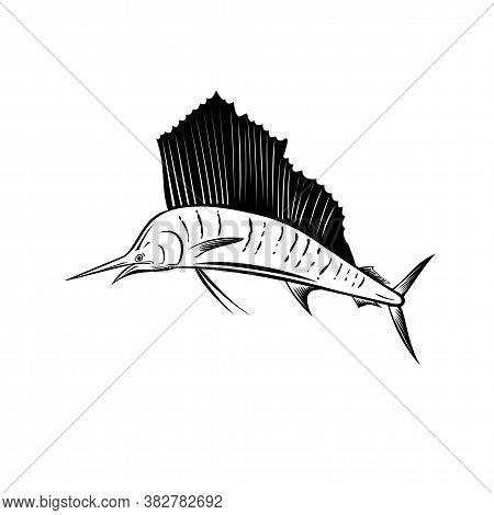 Retro Woodcut Style Illustration Of An Indo-pacific Sailfish, A Fish Of Genus Istiophorus Of Billfis