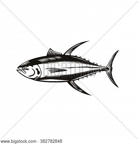 Retro Woodcut Style Illustration Of A Yellowfin Tuna Thunnus Albacares, A Species Of Tuna Found In P