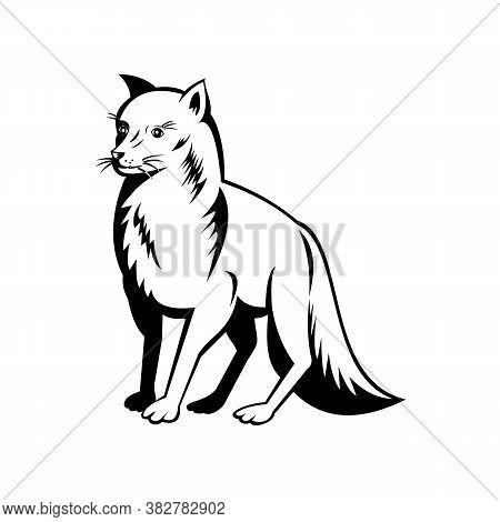 Retro Black And White Style Illustration Of An Arctic Fox, Also Known As White Fox, Polar Fox, Or Sn