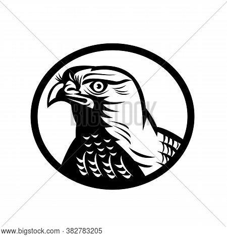 Retro Woodcut Style Illustration Of Head Of A Northern Goshawk, A Medium-large Diurnal Raptor In The