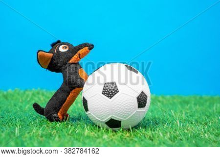 Soft Plaything In Shape Of Funny Little Dachshund Dog Put Its Front Paws On Toy Soccer Ball Lying On