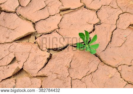 Green Plants Grew In Dry Cracked Earth. Dry Lake Or Swamp In The Process Of Drought And Lack Of Rain